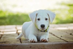 Interesting Facts about Puppies