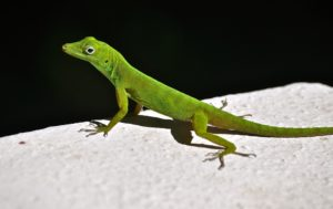 Interesting facts about Lizards