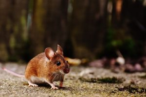 Interesting facts about Mouse
