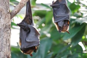 Interesting Facts about Bats