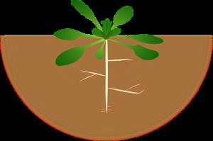 B.Sc. botany