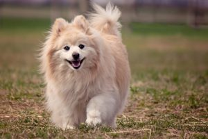 best dog breeds for beginners