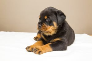 top 10 best dog breeds